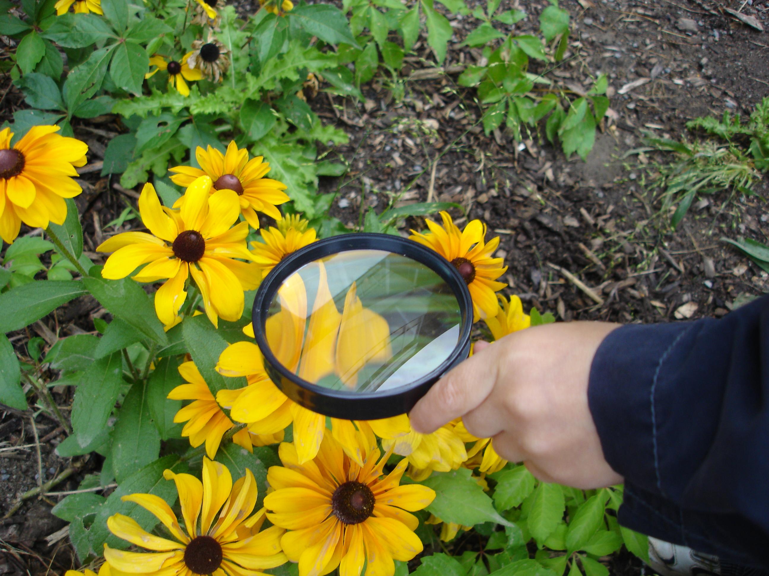 Outdoor Classroom Ideas Kindergarten ~ Learning in the outdoor classroom curious kindergarten