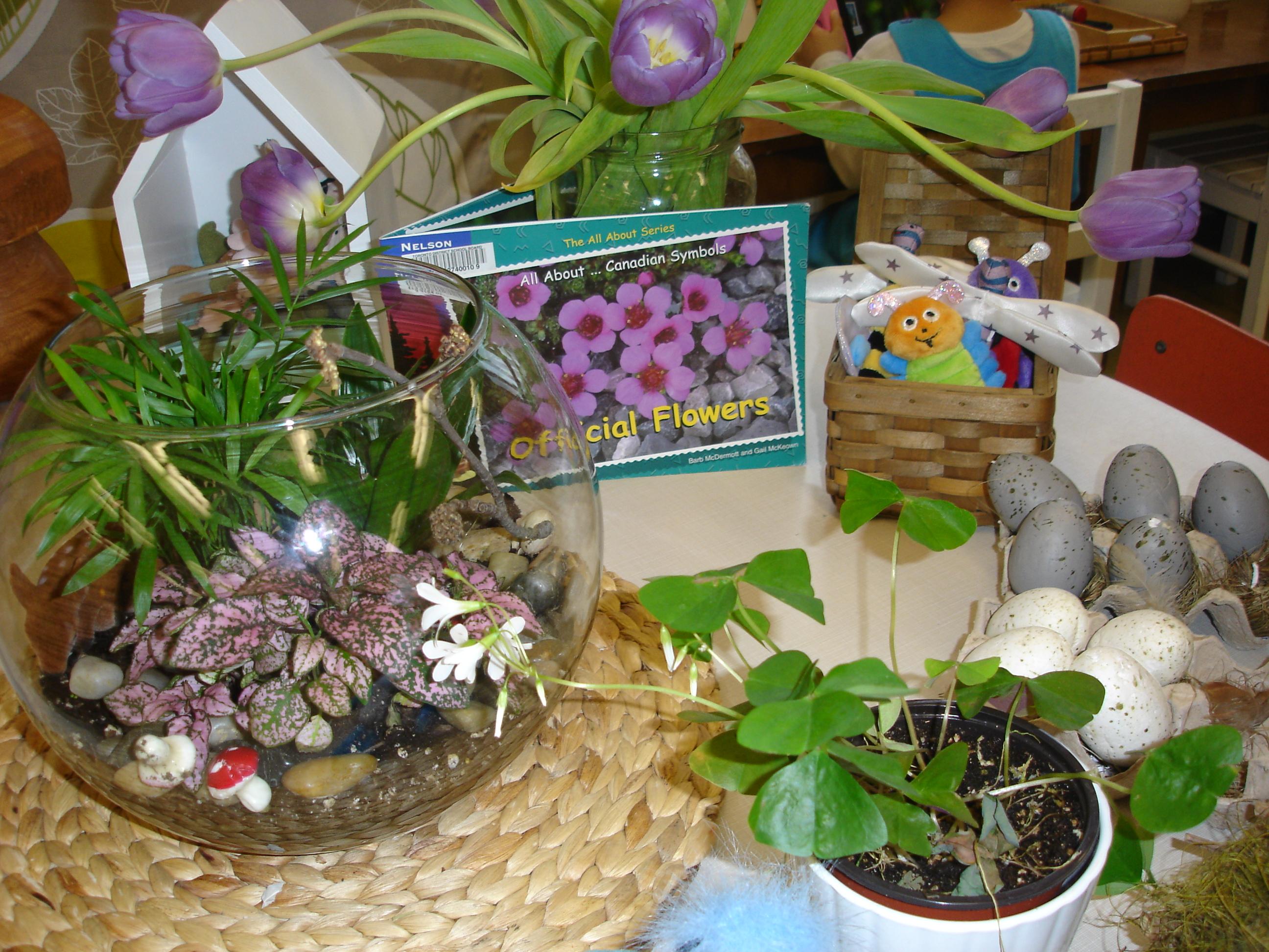 Outdoor Classroom Ideas Kindergarten ~ Outdoor classroom the curious kindergarten