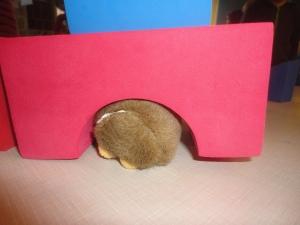 Snuffles seems like he needs a little more space!