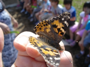 We celebrated the end of our learning journey with a butterfly release party in our outdoor classroom where the children sang songs and talked about their wishes for our butterflies as they flew into nature.